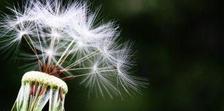 alergia u osób dojrzałych