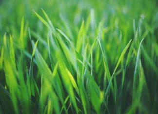 Top 5 akcesoriów niezbędnych do pielęgnacji trawnika